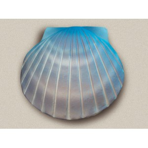 Shell Urn (Aqua)- The Natural Choice